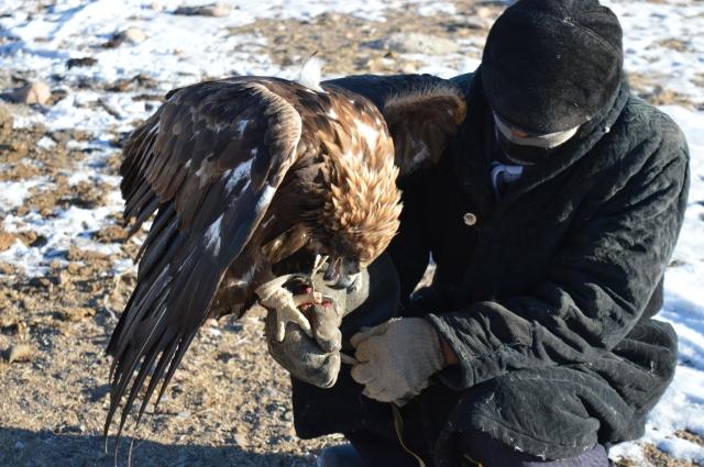 Ardack Feeding the Eagle