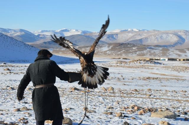 Training the Eagle