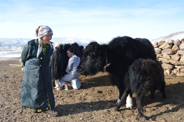 Apa and Janerke milking the Sarlacks